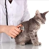 Ветеринарные клиники в Олонце